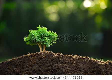Small plant in the morning light on nature background (bonsai tree) - stock photo