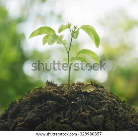 Small plant on pile of soil over green environment, New life concept - stock photo