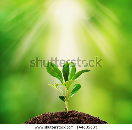 Small plant on pile of soil, part of it reflected - stock photo