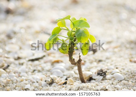 Small plant on sand - stock photo