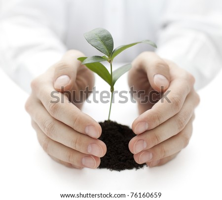 Small plant protected by hands - stock photo