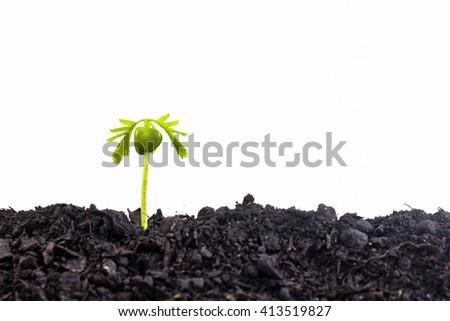 Small plant seedling isolated on white background - stock photo