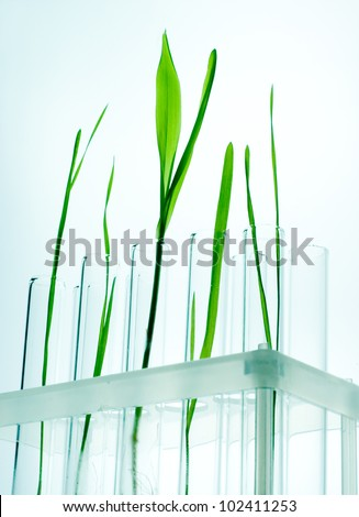 Small plants germinate in test tube, Genetically Modified Organisms - stock photo
