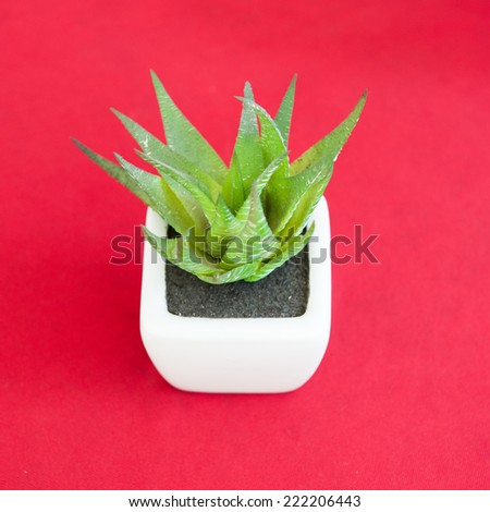 small pot on red background - stock photo