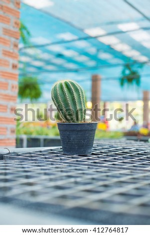 Small prickly cactus in a white flower pot. - stock photo