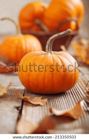 Small pumpkins - stock photo