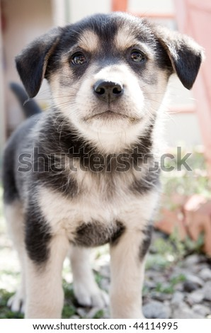 Small puppy looking at you - stock photo
