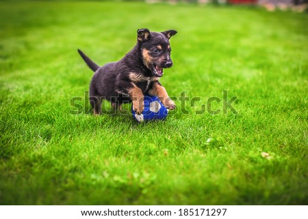 Small puppy mongrel on background of green grass outdoors play with ball - stock photo
