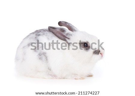 Small rabbit. Isolated on white background - stock photo
