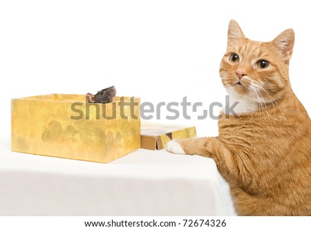 Small rat in a box, near to a red cat, on a white background - stock photo