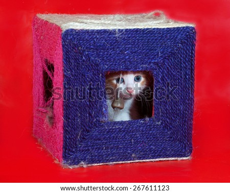Small red and white kitten gets out of scratching posts on red background - stock photo