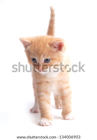 Small red kitten - stock photo