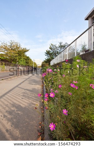 Small residential street with pink flower - stock photo