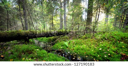 small river in a dark pine forest scene - stock photo