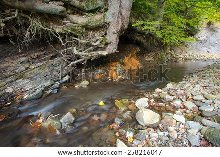 Small river slowly flows in beautiful forest - stock photo