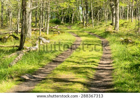 Small road or lane in the green forest. Forest floor is full of grass and other vegetation. Sunshine and shadow mix in undergrowth. - stock photo