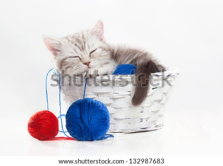Small scottish kitten sleeps in a basket with yarn - stock photo