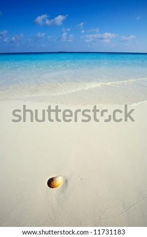 Small seashell is on a sandy beach - stock photo