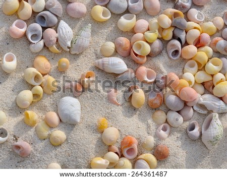 small shells scattered in the sand - stock photo