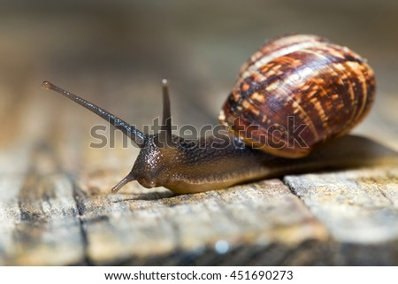 Small snail crawling on an old wooden surface - stock photo