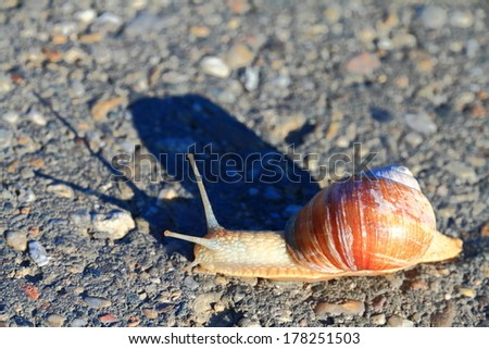 Small snail crosses an asphalt road - stock photo