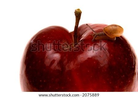 small snail on red apple isolated - stock photo