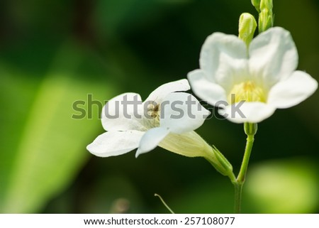Small spider In white flowers - stock photo