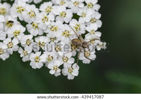 Small spider on white flower petals with green background macro - stock photo