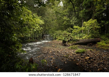 Small stream flowing through virgin rainforest in Sabah, Malaysia. This is  the oldest rainforest in the world, ageing 130 million years old. - stock photo
