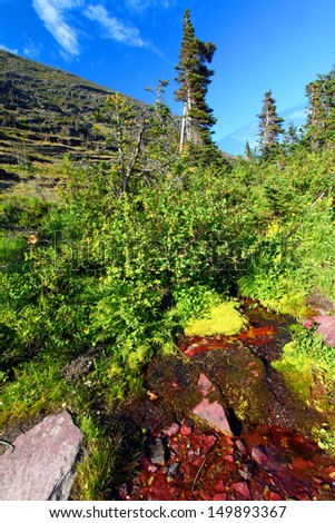 Small stream flows down a heavily vegetated hillside in Glacier National Park - stock photo