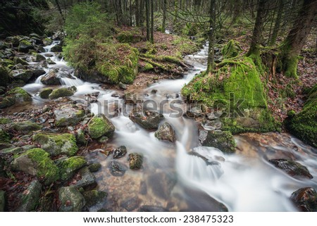 small stream in black forest, Germany  - stock photo