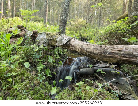 Small stream in natural forest - stock photo