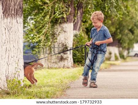 Small stubborn puppy, come to me - stock photo