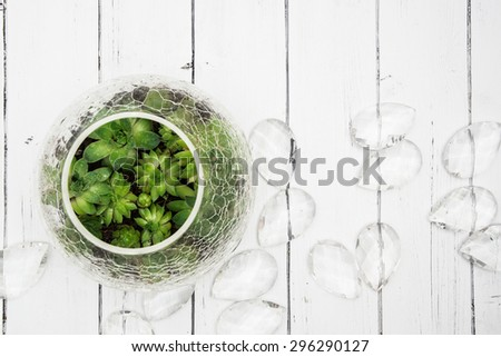 Small succulents in glass crack vase top view with glass decorations on a white wooden background - stock photo