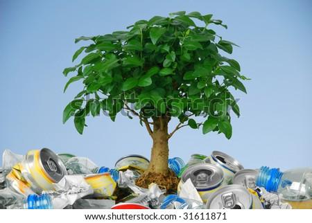 Small tree growing in rubbish - stock photo