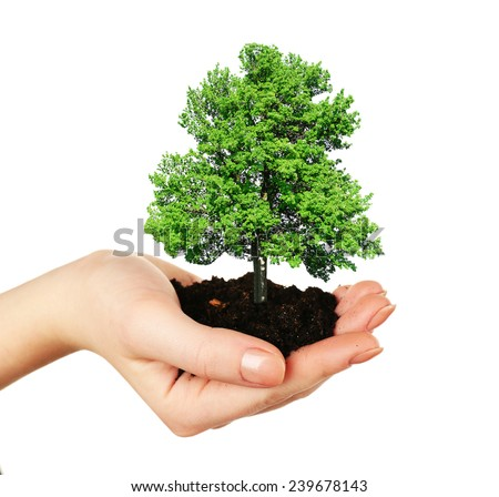 Small tree in hand isolated on white - stock photo
