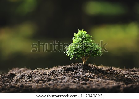 small tree out door in the sunlight - stock photo