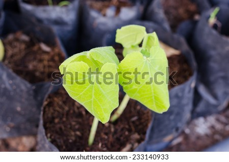Small tree seedlings planted in a bag . - stock photo
