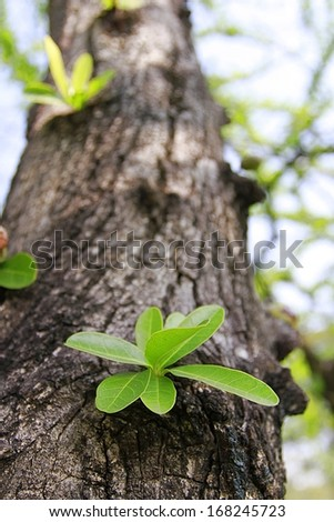 small trees growing on the old timber . - stock photo