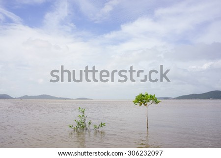 Small trees on the lake - stock photo