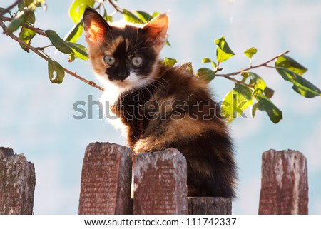 Small tricolor kitten on fence. Spring - stock photo