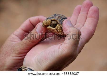 Small turtle on a hand of a tourist guide.  - stock photo