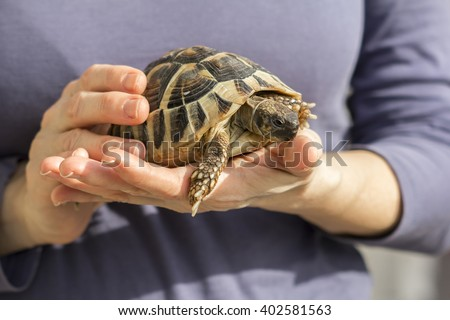Small turtles, pet in the hands of a woman - stock photo
