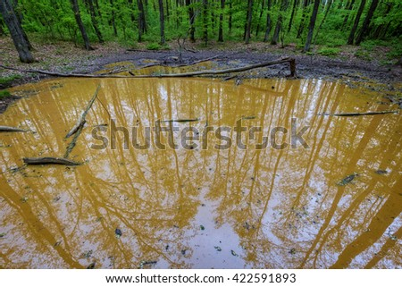 Small water puddle in the forest where large mammals come to wallowing in mud - stock photo