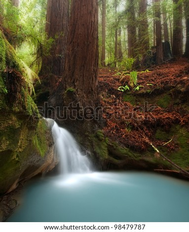 Small waterfall in beautiful California redwood forest - stock photo