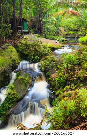 Small waterfall in jungle - stock photo