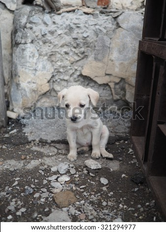 small white homeless puppy on the ruined building background. The concept of loneliness, help an animal charity. - stock photo