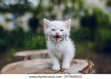 small white kitten outdoors - stock photo