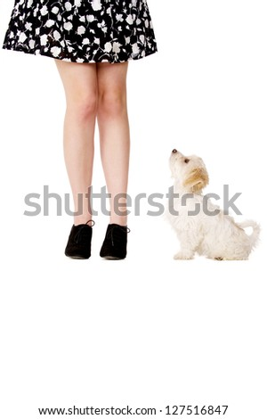 Small white puppy sat next to a woman's legs looking up at her - stock photo