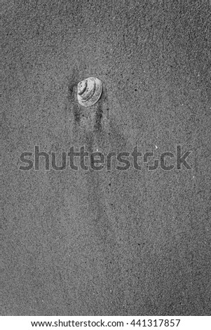 Small White Shell in Sand in Black and White - stock photo